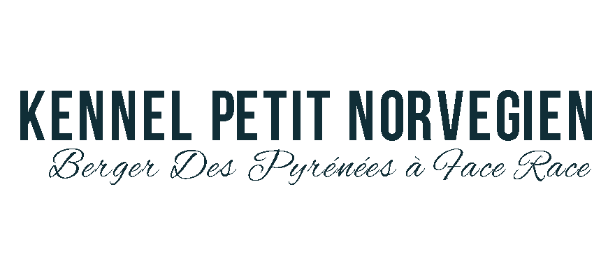 Pyreneisk Gjeterhund – Kennel Petit Norvégien