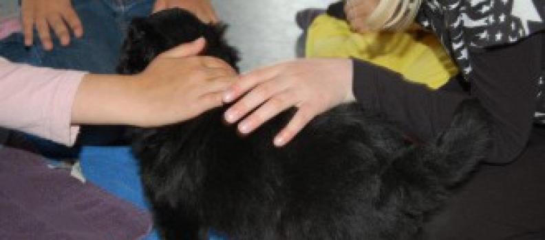 Herpesvirus hos hund